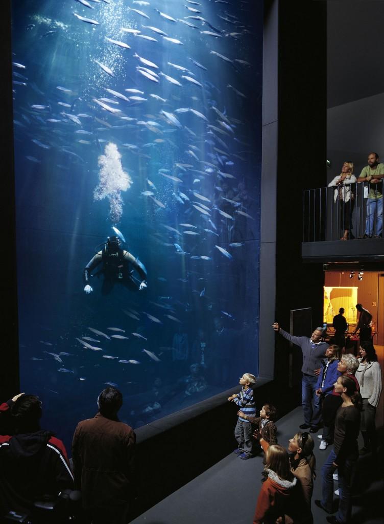 Tauchereinsatz im Tiefenbecken, Deutschlands größtem Aquarium für heimische Süßwasserfische. Bild: Werk3, Andreas Duerst